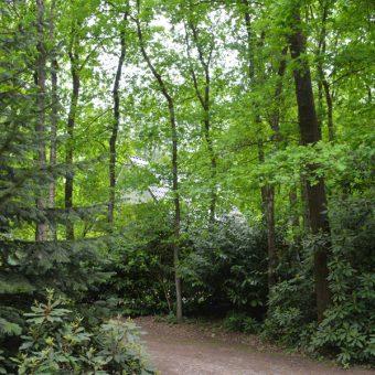 U wandelt zo vanuit het Kuierhoes het bos in